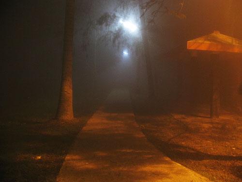 Foggy, IIM Calcutta